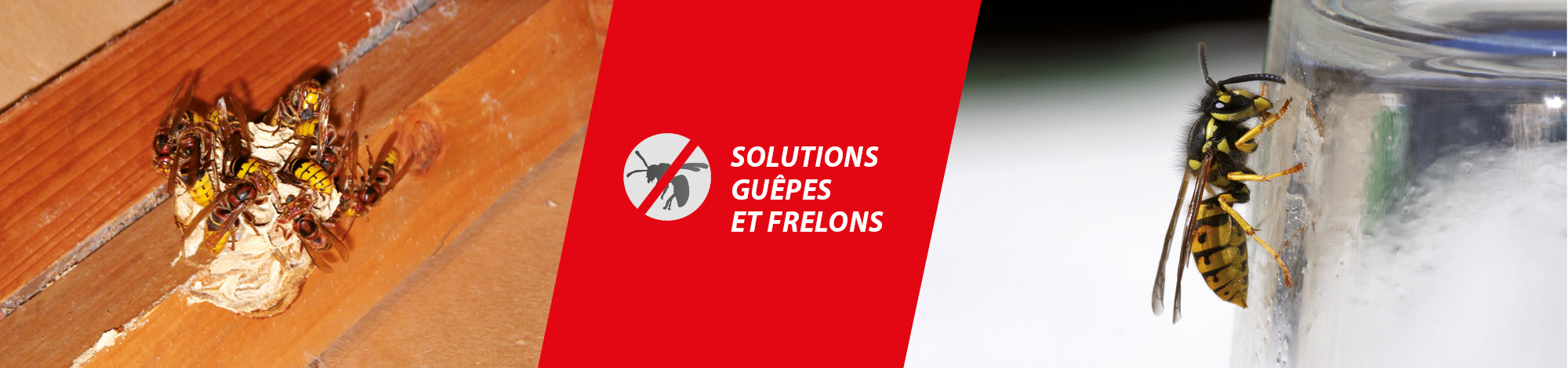 solutions frelons